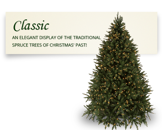 Slim Douglas Fir Christmas Tree