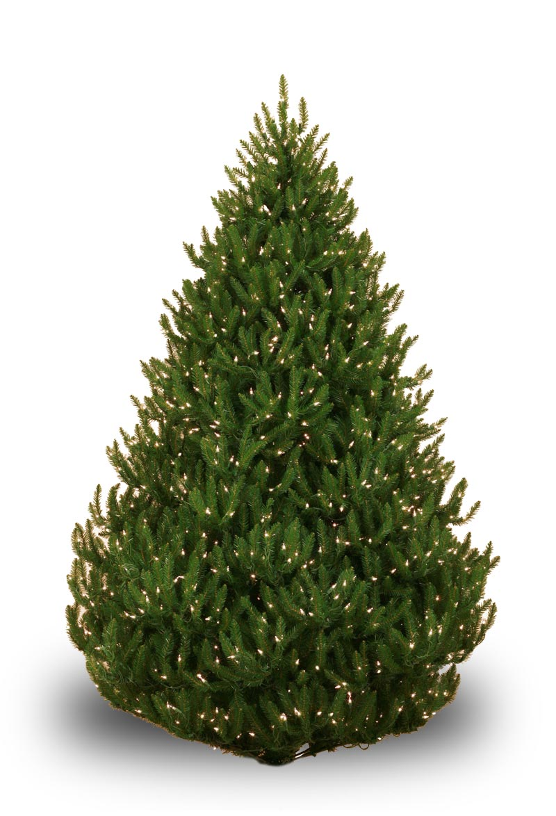 Norway Spruce Prelit Tree Christmas Lights Etc