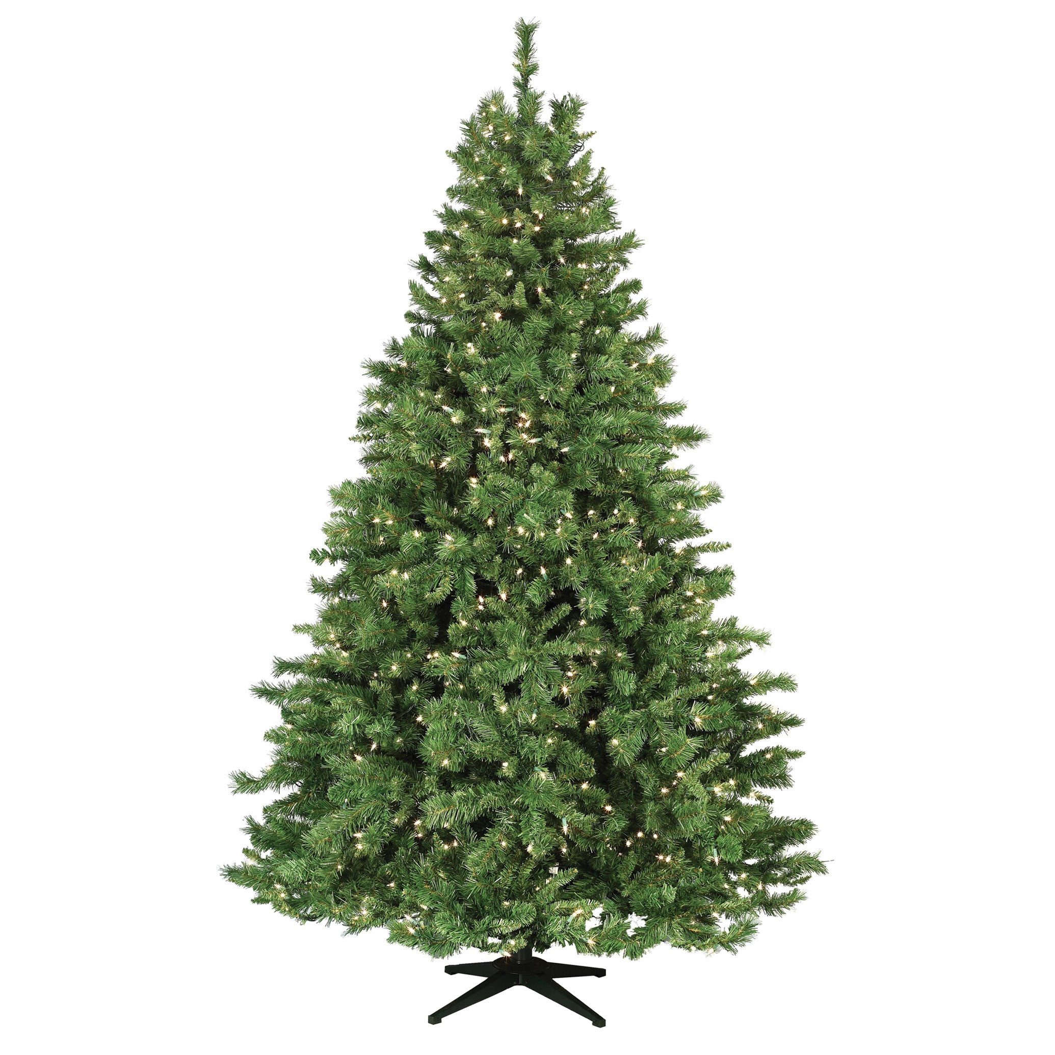 Cumberland Fir Tree