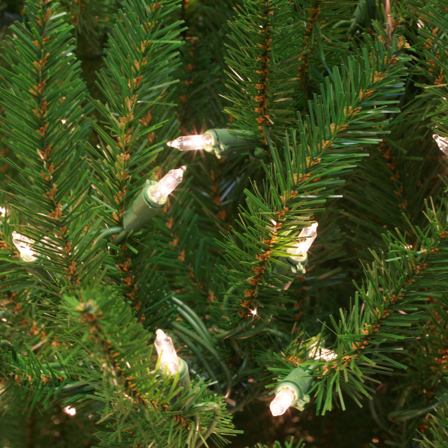 Norway Spruce Tip Bundle