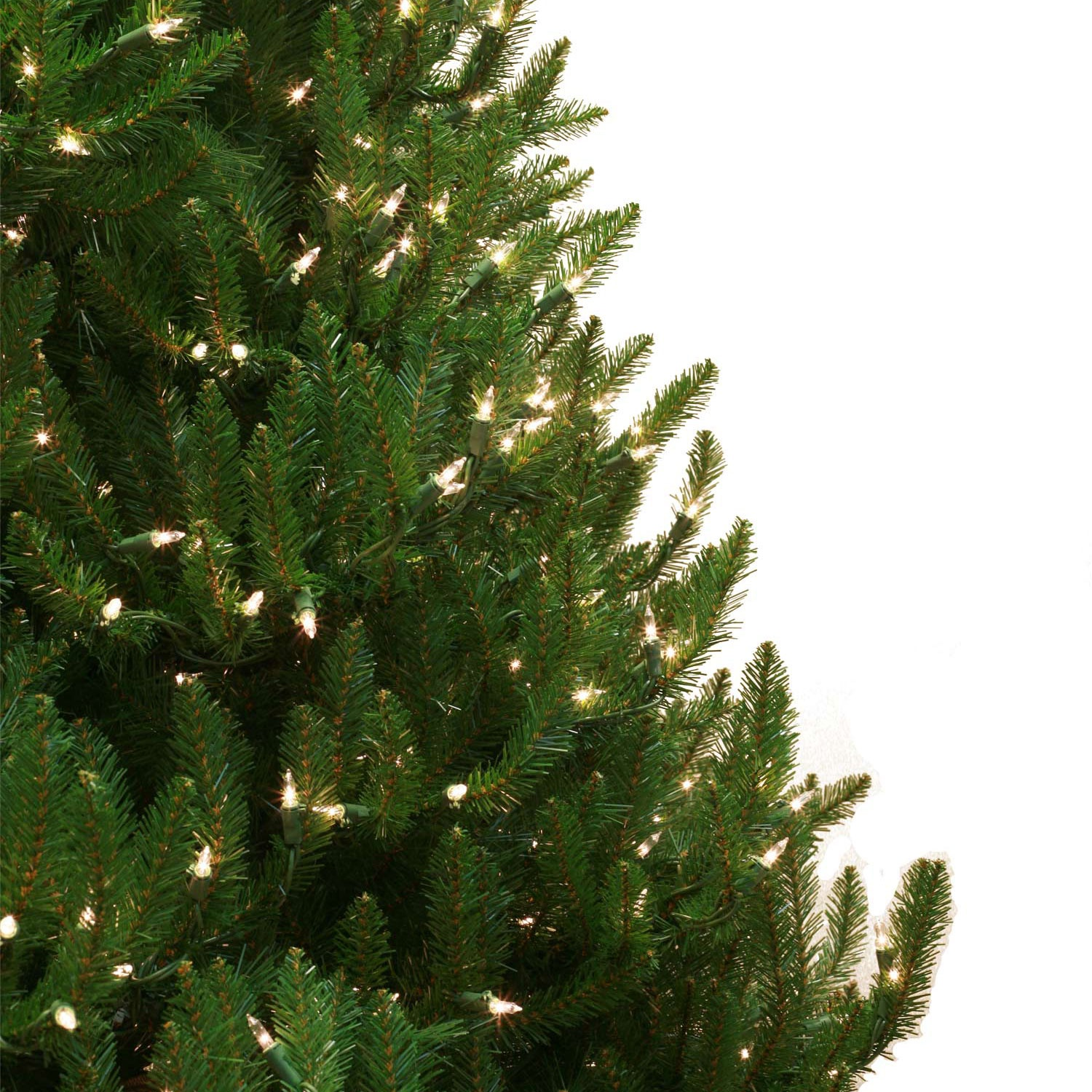 Norway Spruce Profile