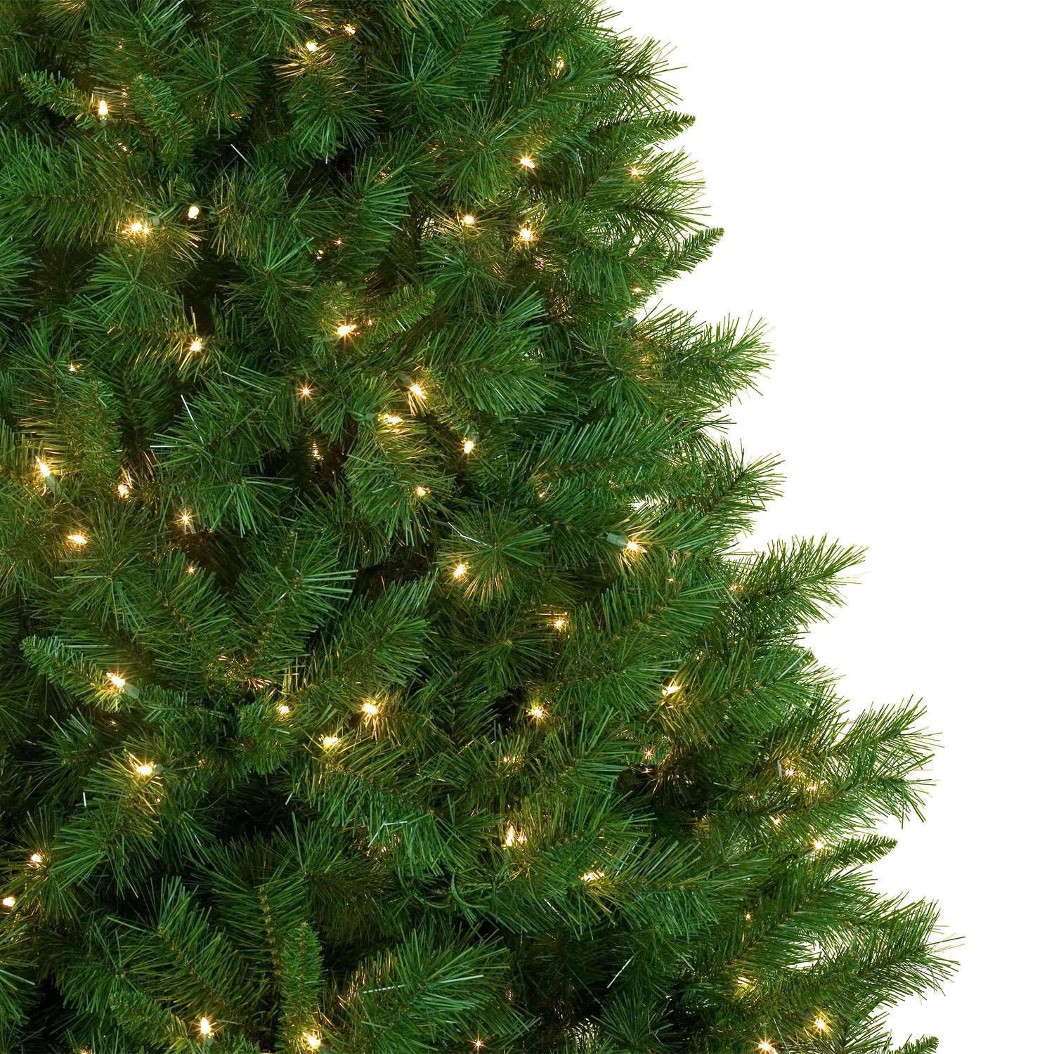Dunhill Fir Tree Profile