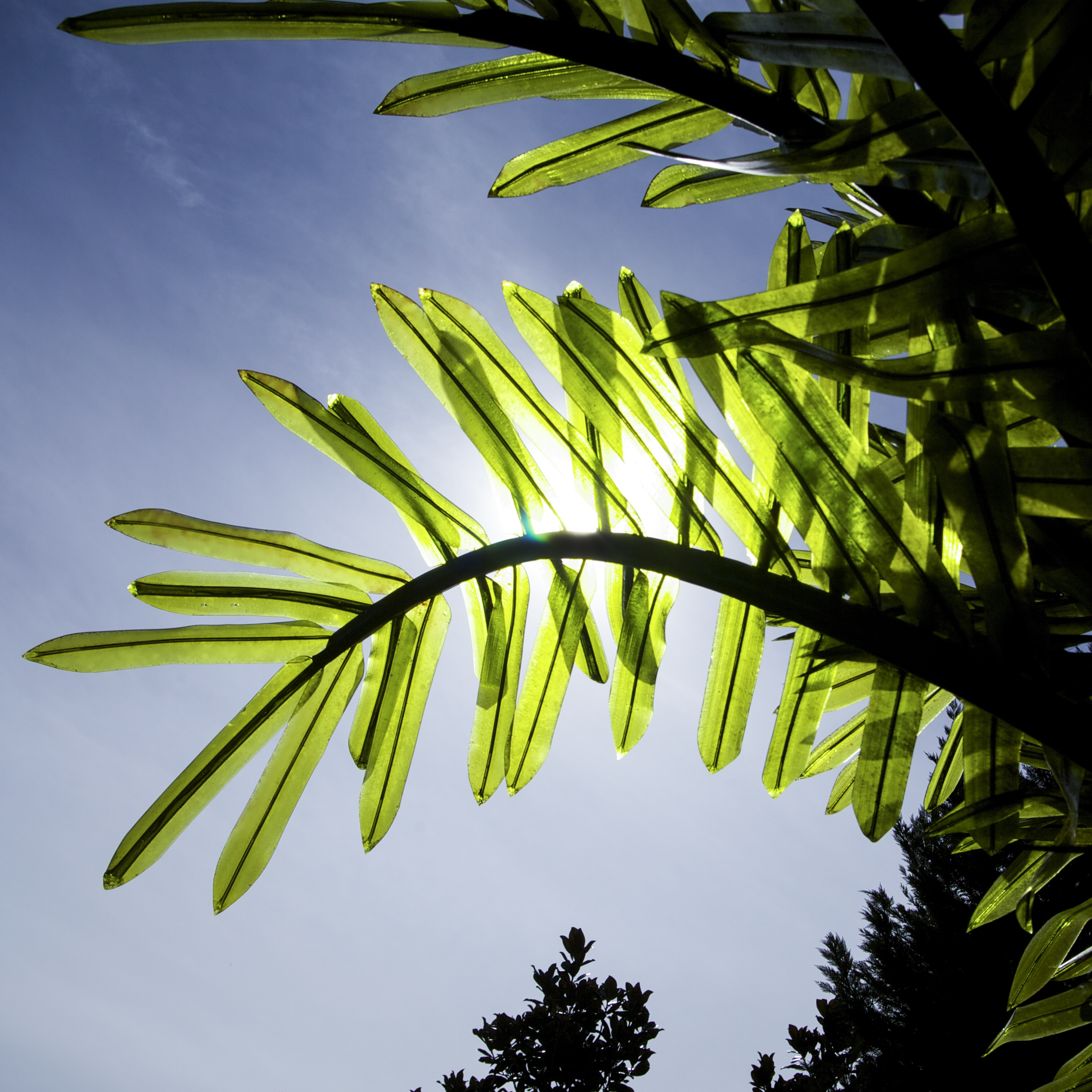LED Commercial Realistic Palm Tree Fronds