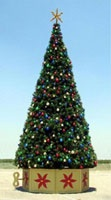 14' Rocky Mountain Pine Tree, 231 Clear C7 5 Watt Lamps