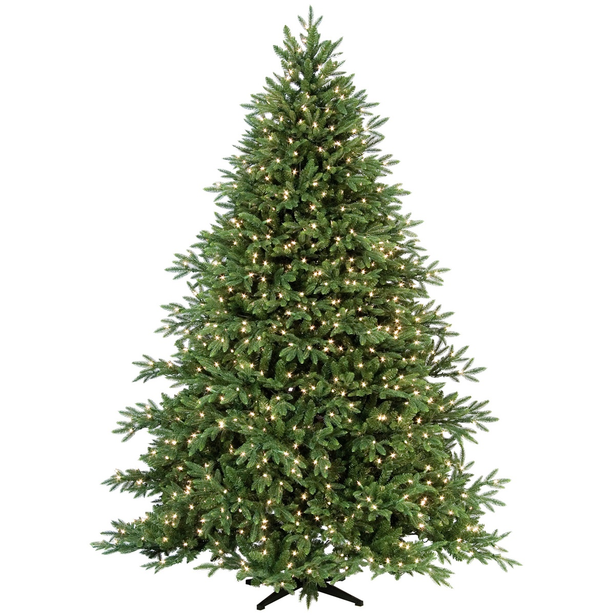 Carolina Fir Tree