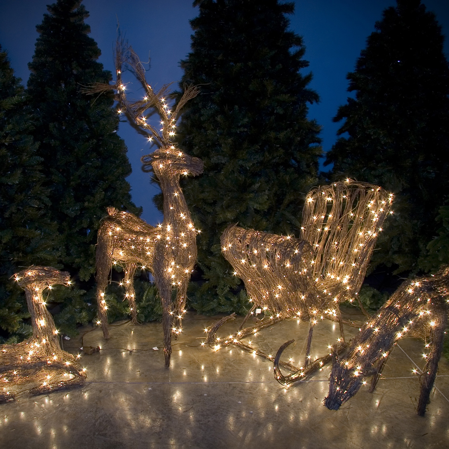 Outdoor Christmas Led Lights