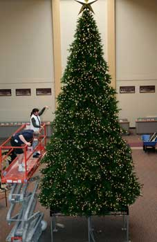 Giant Christmas Tree Assembly