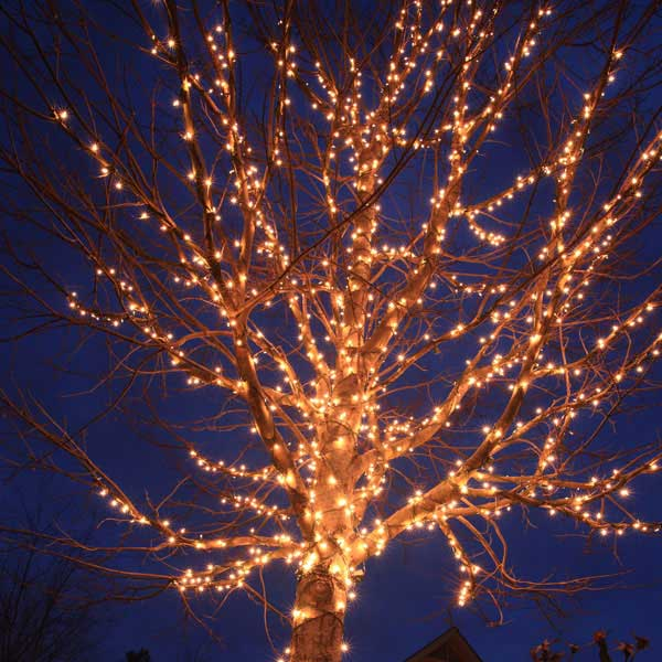 How Many Lights For Trees