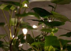 Plants With Battery-Operated LED Fairy Lights