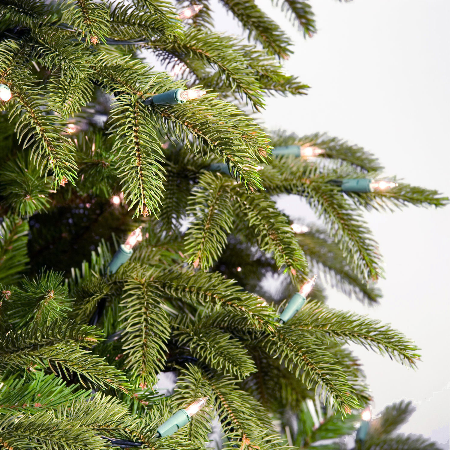 Fraser Fir Christmas Trees: Fraser Fir Prelit Tree