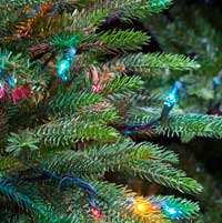 Multicolor Christmas Trees